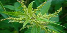 Травы в лечении экземы