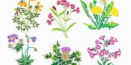 Травы для улучшения пищеварения
