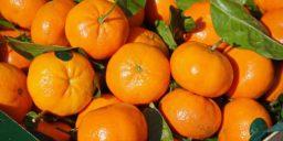 Чем полезна кожура мандаринов
